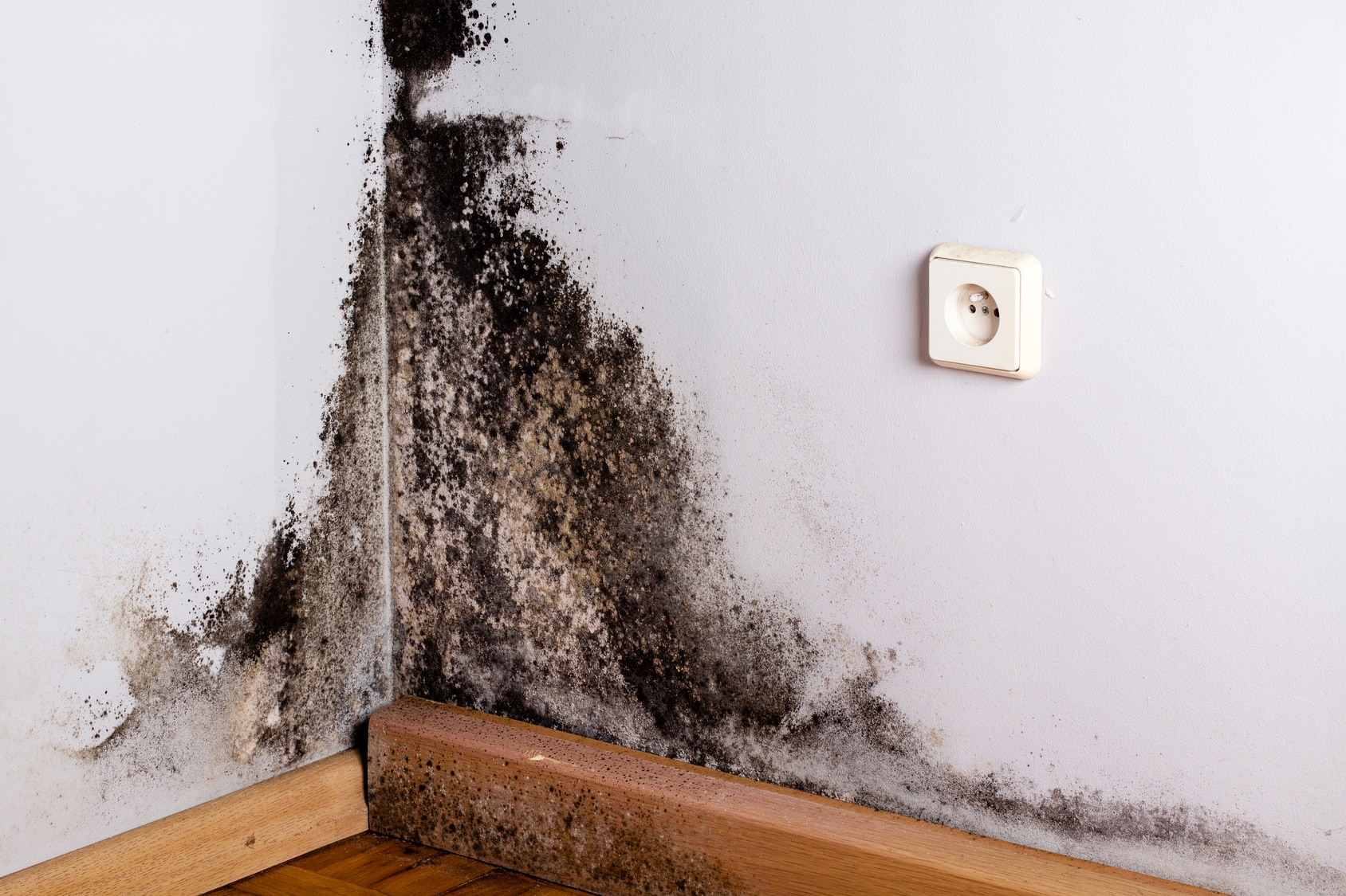 mold & real estate sales