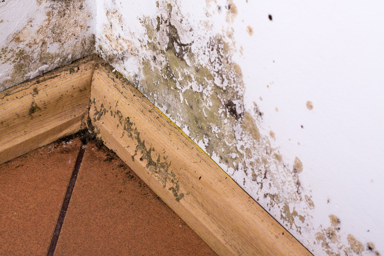 pride cleaning & restoration Mold Removal st louis