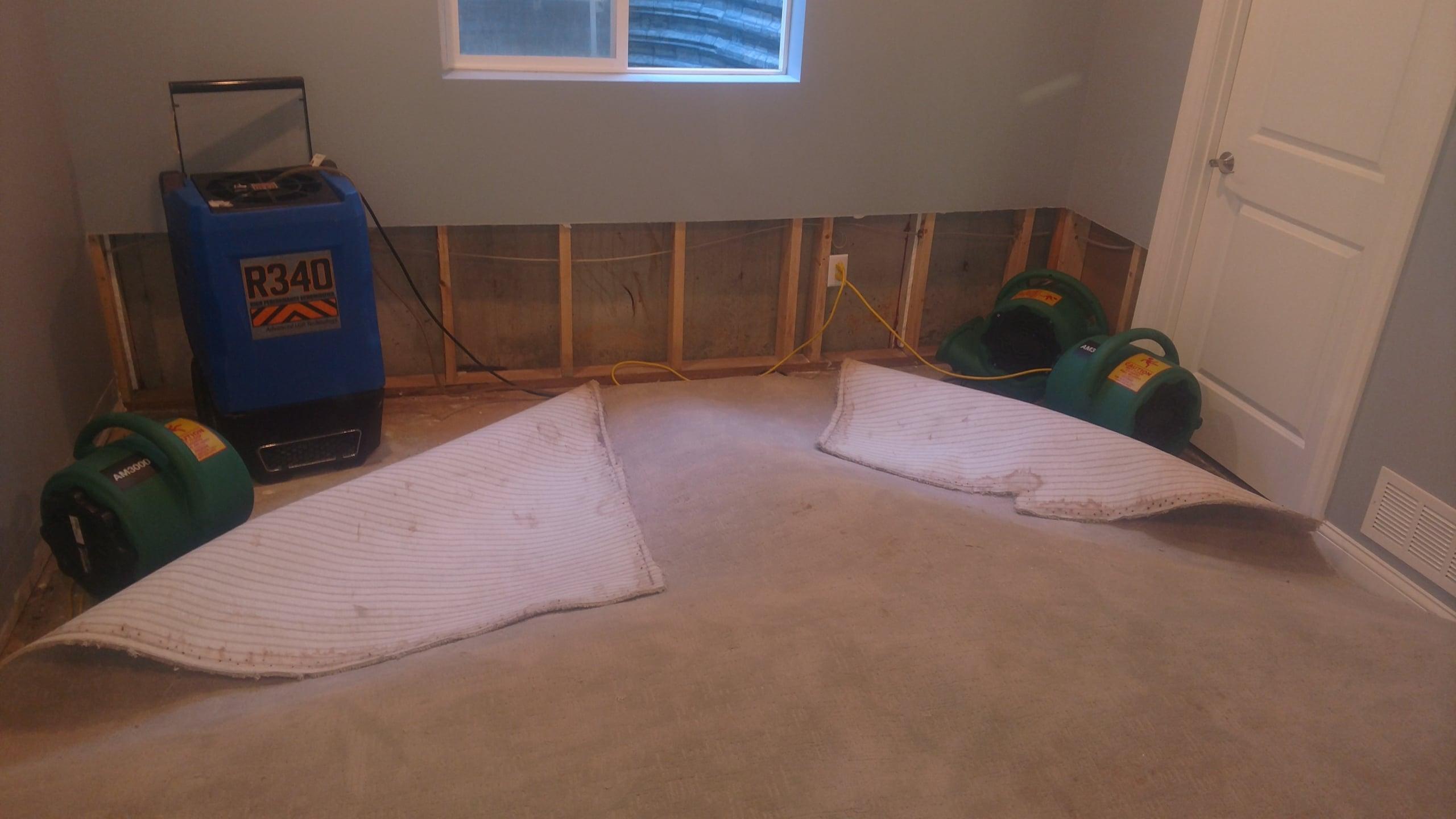 st louis carpet mold