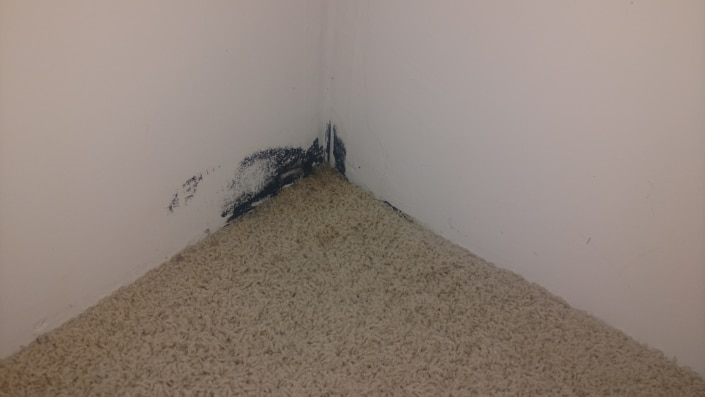 mold inspection st louis