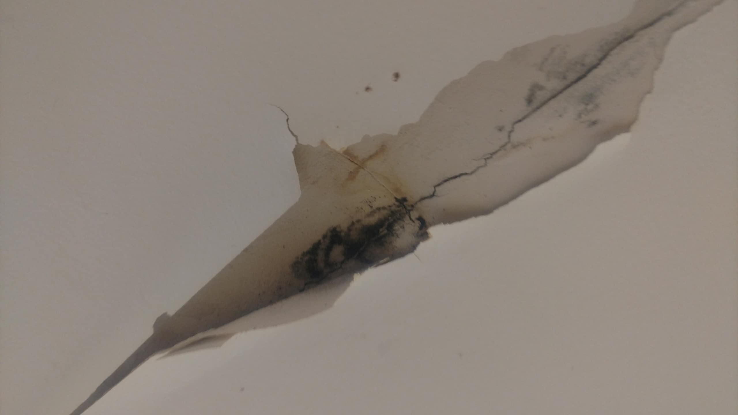 Mold St Louis Removal