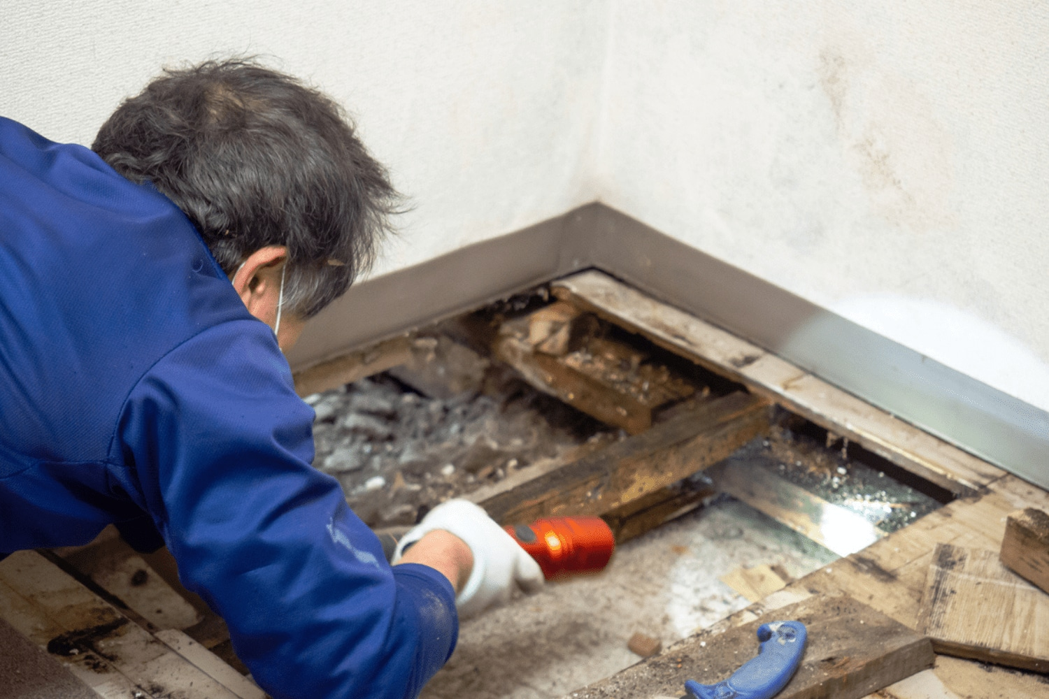Cost of mold removal St Louis