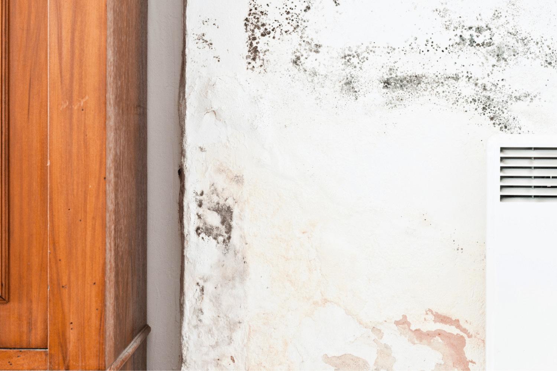 Mold Prevention St Louis
