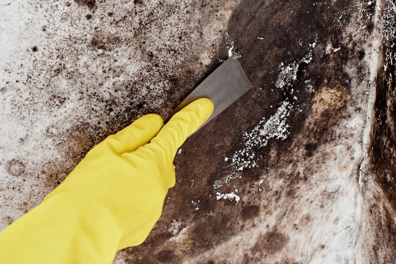 Types of mold pride cleaning and restoration